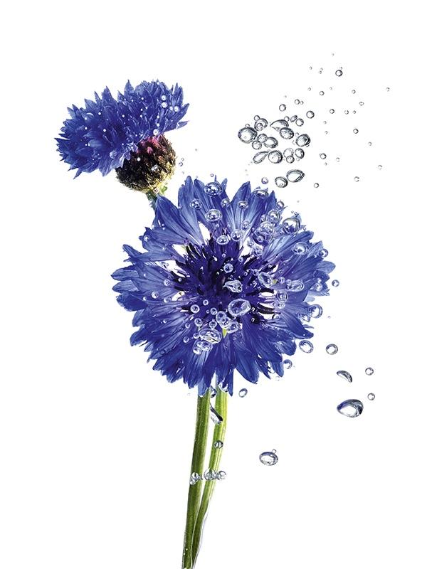 Garnier Corn Flower Micellar