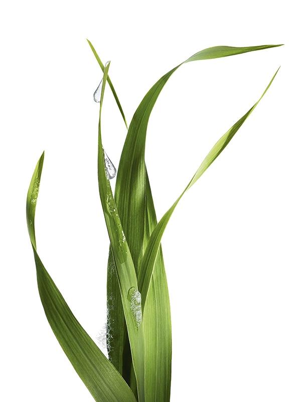Garnier Lemongrass Mosituriser