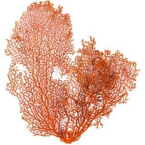LOP Pure Clay Exfoliating Red Algae